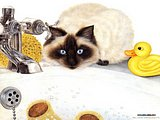 Persian cat - Cat Paintings by Mortimer Anne 5 pics