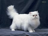 Loveable Domestic Cats collection 90 pics