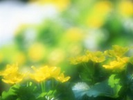 Dreamy Soft Focus Flowers - Pure and Sweet Wild Flowers (Vol.03)48 pics