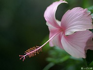 Nature Flowering - FLower Photography Series (Vol.06)50 pics