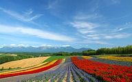 Furano Travel: Flower Fields and Country Scenery 38 pics