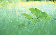 Soft Focus Photography - Blissful Green leaves42 pics