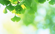 Soft Focus Photography - Pure and Fresh Green Leaves42 pics
