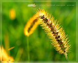Beautiful June Calendar wallpapers by Wallcoo15 pics
