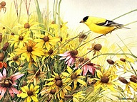 Backyard Birds : Beautiful Birds Paintings 11 pics